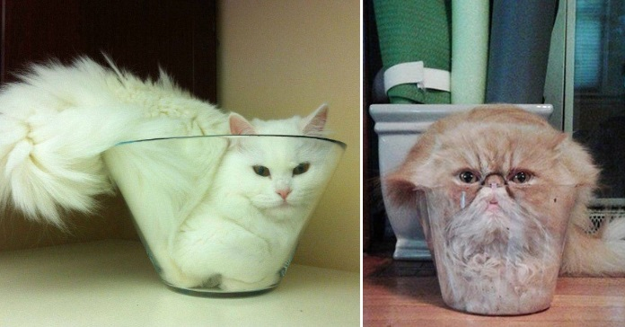 Hilarious Pictures that Prove Cats Are Liquid